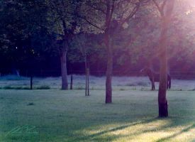 Forest Glade (4) by NicPi
