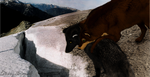 Sonie and Strong on Buckskin Glacier by Str0ngwolf