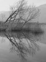 reflections in BandW by alecarote