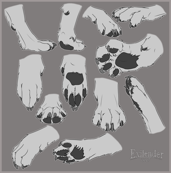 Canine Paw Study by Exilender