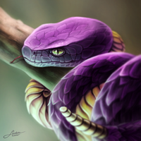 Ekans - Pokedex Project
