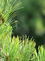 The spider's web by sofoolkate