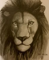 Lion by MarcoHauwert