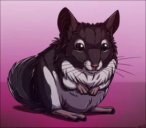 Lilo the chinchilla by chezzepticon