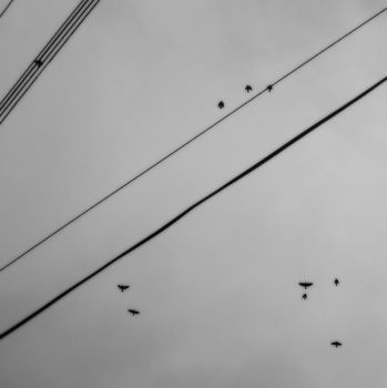 Birds + Lines V by Daionii