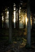 Forest at sunset 3 by mprangenberg