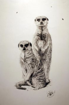 meerkats 2 by abearoriginal