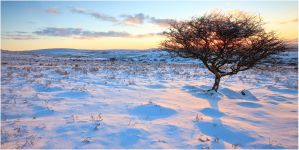 a winter's burning bush by sassaputzin