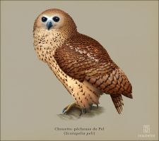 Pel's Fishing-owl by Leaubellon