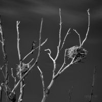 SUBART-LANDSCHAFT-INFRARED-009 by subart59