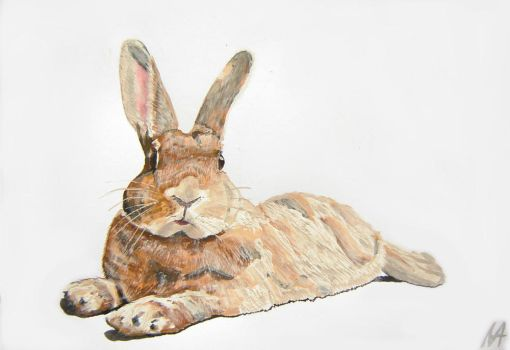 Time to rest! Rabbit: Floryda by M-J-M-A