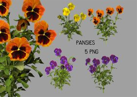 Pansies by SuicideOmen