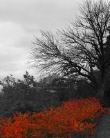 The Burning Bush by carriepage