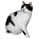 Black and white cat free stock by JaneEden