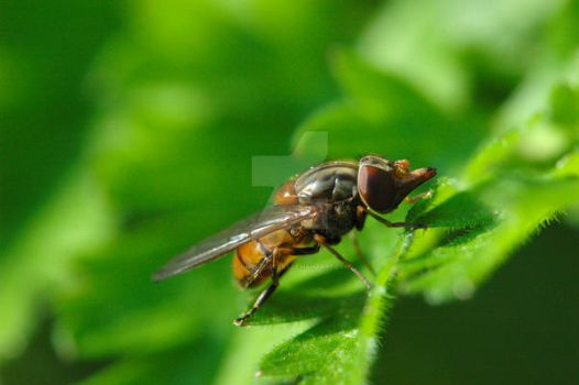 Hover Fly 2 by oliverporter3