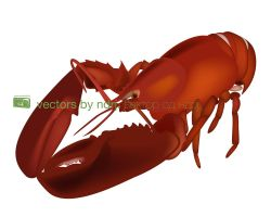 Lobster Vector by ndrj