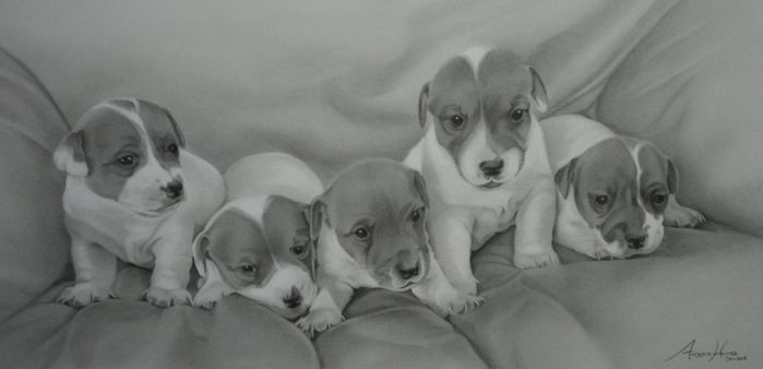 Commission - 5 Jack Russell puppies by Captured-In-Pencil