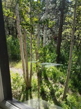 Aspens Through the Window by no-white-knights