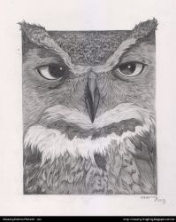 Pencil Owl by Frog-FrogBR