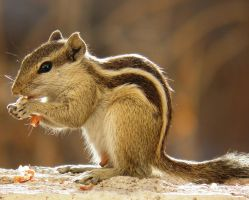 nuts nut by kumarvijay1708