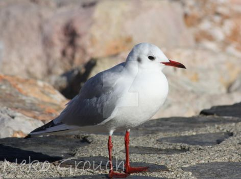 mouette by Neko-Grouch