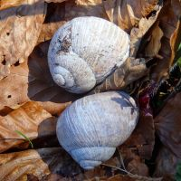 snail shell by Mittelfranke
