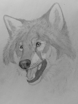 Wolf Sketch by Wild-As-Wolves
