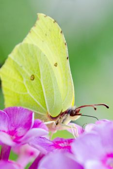tiny butterfly by housel1984