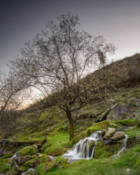 a tree and a waterfall by MarcosRodriguez