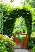 ::green.arc.and.gate:: by Phantom-of-light