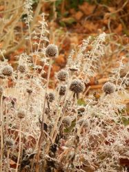 Shades of Autumn 2015, 10 by MadGardens