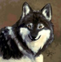 wolf by Apricolor
