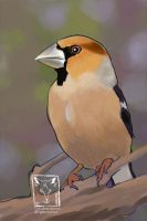 Work in progress : Hawfinch by dragonladych