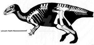 Jinzhousaurus yangi skeletal reconstruction by ornithischophilia