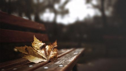 Gif - Autumn leaf by turst67
