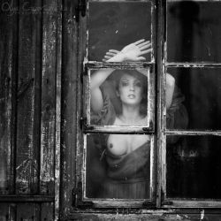 In the window by OlgaC