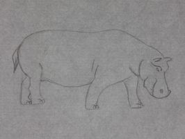 Hippo by Sharon1997