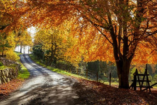 Autumn road by Wodger