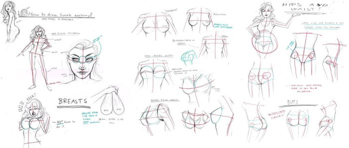 Female Anatomy Tutorial by BleedingHeartworks