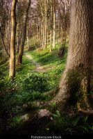 Forest 27 by AnitaJoy-Stock