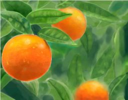 Oranges by genevi