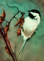 Chickadee by melaniey