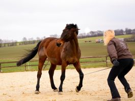 Free Dressage- Attacking Wild Horse by LuDa-Stock