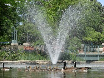 A Gaggle of Geese by the Fountain by RobMitchem
