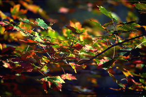 Colorful Leaves by EmeraldDust