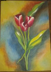 Tulips by lidianne