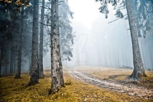 The misty forest IV by schwarzeKatze18