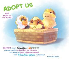 Adopt a basket of guinea pigs by Fany001