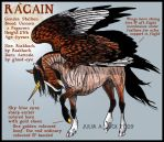 IHS Racain by IronHill-Stables
