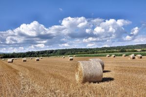 Summer in Klettgau-County 2 by OfTheDunes